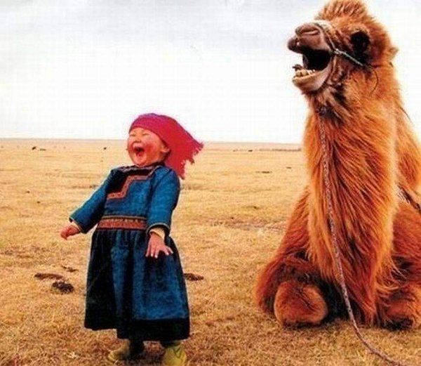 laughing camel and little girl